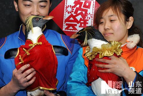 青岛极地海洋世界动物穿新衣迎新年